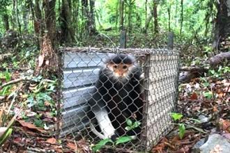 Thả động vật về môi trường tự nhiên